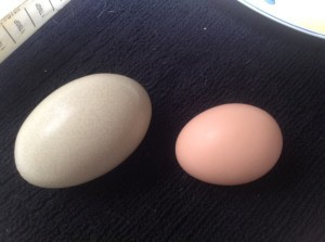 Fall is Coming - Chicken Eggs